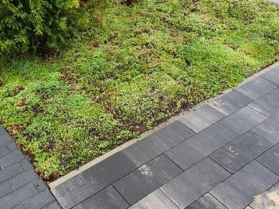 dachy zielone 74