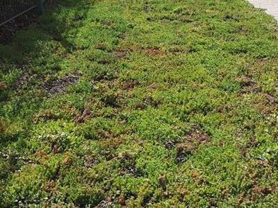 dachy zielone 73