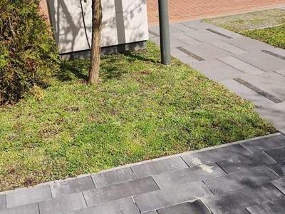 dachy zielone 76